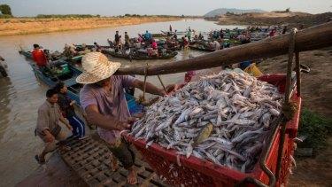 Fishing boats are unloaded near Siem Reap,Ton Le Sap Lake, Cambodia.