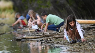 Children collect feathers from the lake at Jells Park.