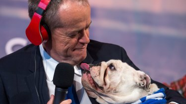 Federal Opposition Leader Bill Shorten with Matilda, his 3-year-old bulldog on Nova radio. The network's lightheartedness helped owner Lachlan Murdoch secure competition approval to buy Ten.