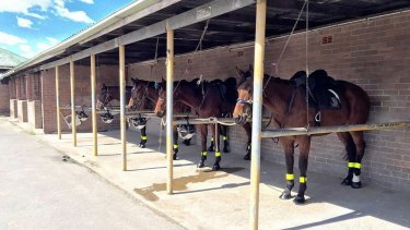 The ATC's mounted division has been closed since cruelty allegations surfaced in January.