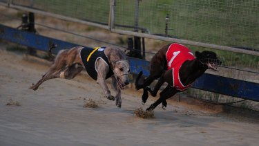 Greyhound racing is to be banned in the ACT.