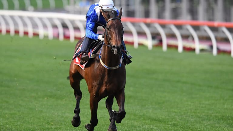Cox Plate favourite Winx is taken for a gallop by jockey Hugh Bowman during a trackwork session at Moonee Valley racecourse in Melbourne on Tuesday.