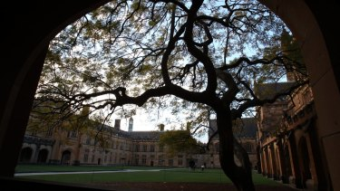 The jacaranda in the main quadrangle at Sydney University was planted 88 years ago..