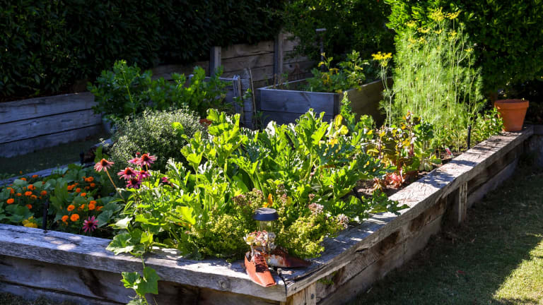 A fertile patch in the Forges' garden.