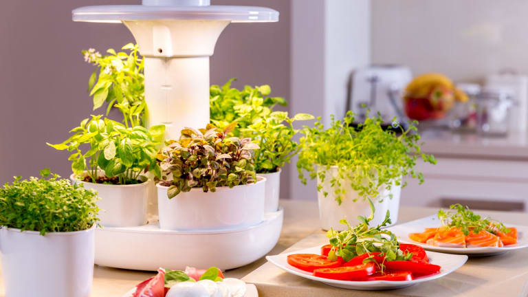 The Urbipod is designed and made in WA and allows fresh produce to be grown in your home.