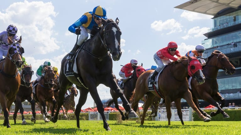 What a cracker: Blake Shinn rides Music Magnate to win the Christmas Classic at Randwick on Saturday.