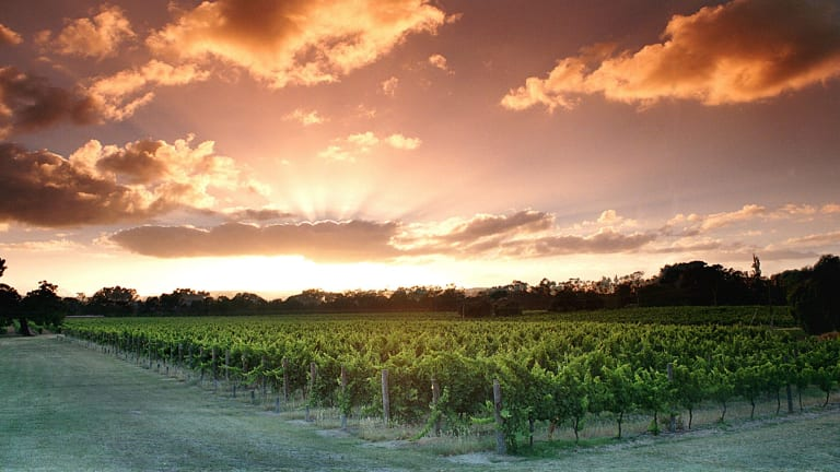 Perth is lucky enough to have a world-class wine region practically within skipping distance. Just a 30 minute drive from the city and you can be chilling among the vines before you know it.
