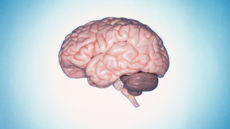 There is evidence of brain differences in long-term meditators compared to non-meditators.