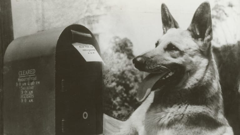 Made between 1954 and 1959, the US series The Adventures of Rin Tin Tin was a staple of Australian TV well into the 1970s.