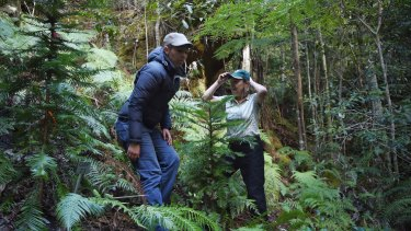 Dr Heidi Zimmer (left) with Dr Cathy Offord take the Fairfax team into the secret Wollemi pine site.