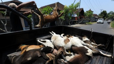 Dogs killed in a cull are loaded onto a truck.