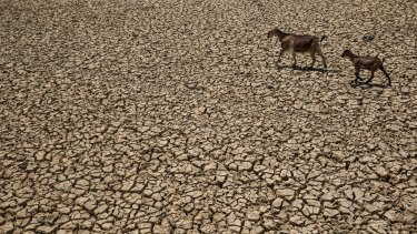 Indonesia's national disaster management agency has declared the majority of the country's 34 provinces are experiencing drought caused by the El Nino.
