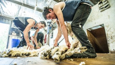 The intensive workshops  run by Australian Wool Innovation.