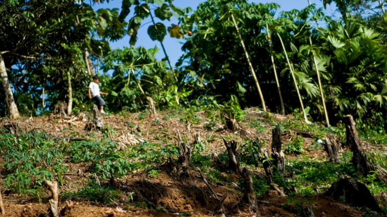 """Cleared land in Ecuador: the deforestation """"boundary"""" has been crossed, scientists say."""