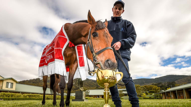 Almandin, winner of the 2016 Melbourne Cup, with strapper Joe Flannery.