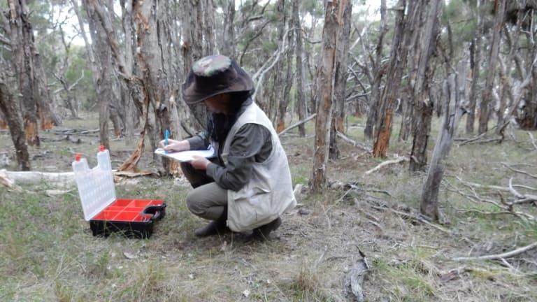 Donna Davis collecting fungi.