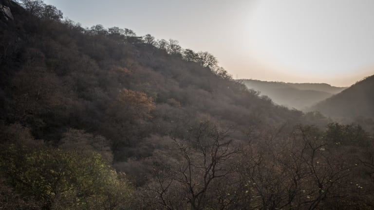 The vast Mangar Bani forest spans 677 acres.
