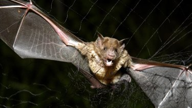 Earth is full of bloodsuckers such as the vampire bat.