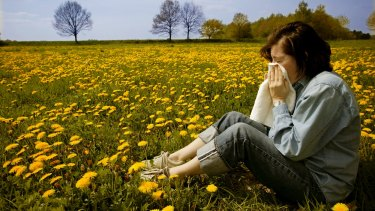 Canberra had a record breaking hay fever season in 2014.