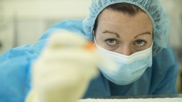 A forensic biologist performs a DNA test in the NSW forensic lab in Lidcombe.