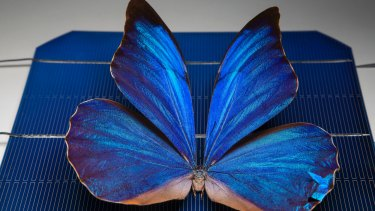 Engineers have invented tiny structures inspired by butterfly wings that open the door to new solar cell technologies.