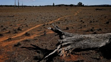 """Conservation groups have dubbed the land clearing policy a """"so-called biodiversity act""""."""