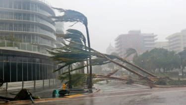 Palm trees lie strewn across the road as Hurricane Irma barrels into Florida.