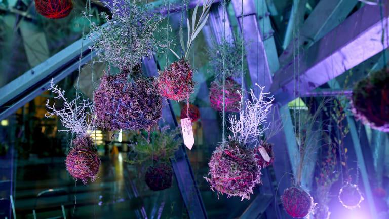 Hanging plants created during Tanja Beer's workshops.