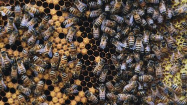 The Department of Parliamentary Services, Australian National University Apiculture Society and engineering firm Aurecon have collaborated on the project.