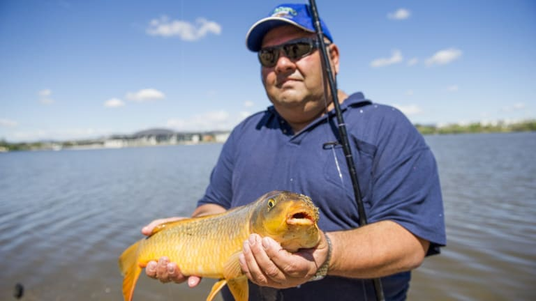 Charlie Diedo has caught and released hundreds of carp in Lake Burley Griffin.
