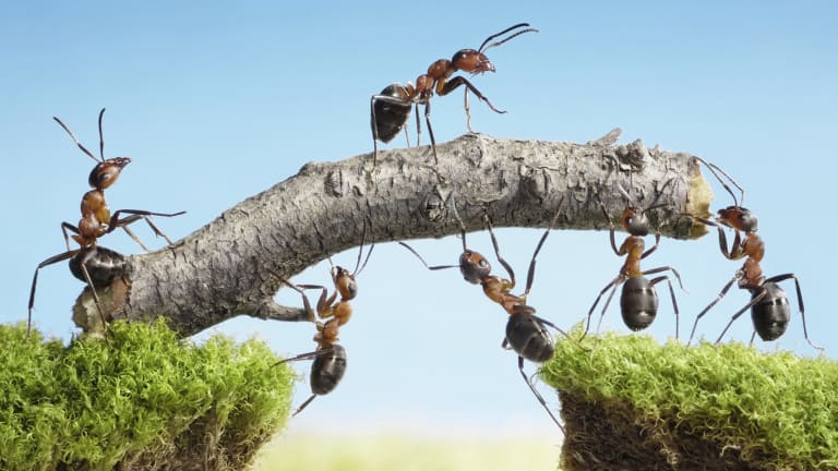 There are more than 1400 ant species native to Queensland.