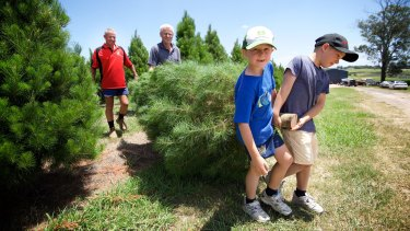Mervin McKelvey and his grandsons Beau and Lane select a tree from Willy's Christmas Tree Farm.
