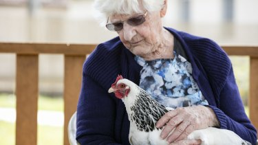 Aged care provider the Whiddon Group is trialling chicken coops in nursing homes.