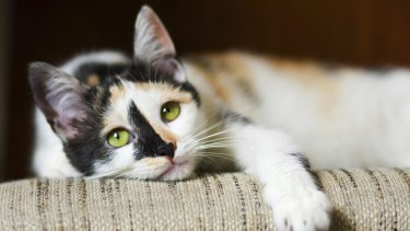 The journey from domestic cat to feral cat can be short.