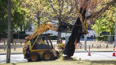 Tree removal at Northbourne Avenue on April 20.