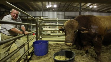 Stephen Lill with his prized bull Valentino that had to be put down after being injured in the fire.