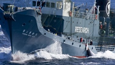 The Japanese whaling fleet operating in the Southern Ocean in 2013.