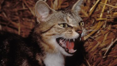 Brisbane City Council has trapped more than 3000 cats since mid-2013.