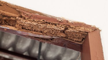 Termites can damage any timber parts of a house.