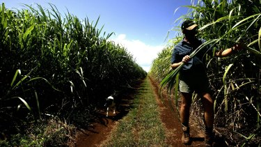 Farmer Kelvin Griffins on his sugarcane farm in Bundaberg, which has received drought status.