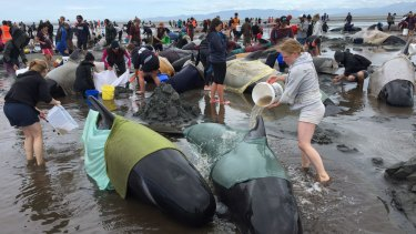 Volunteers tend to the whales on Saturday morning.