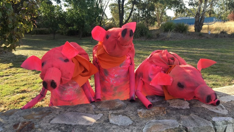 These three little pigs were spotted in Collector this week.