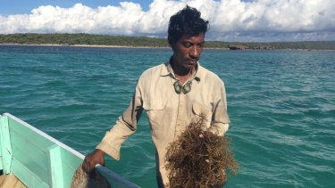 Rote seaweed farmer Nikodemus Manefa says the seaweed turned white and fell off the string.