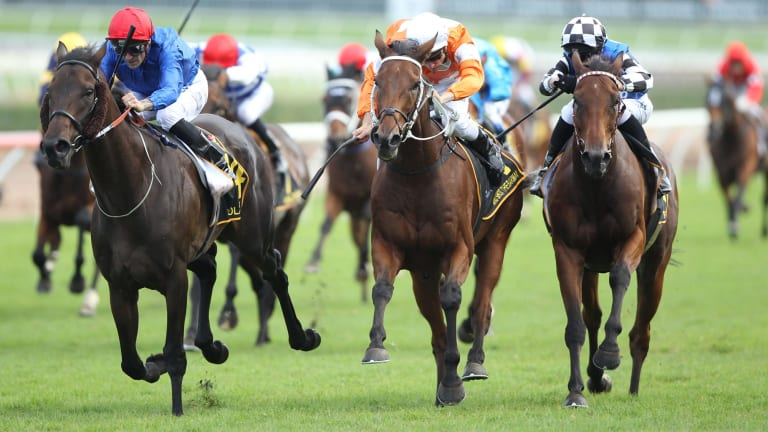 Raider wins: Corey Brown rides Polarisation to victory in the Sydney Cup.