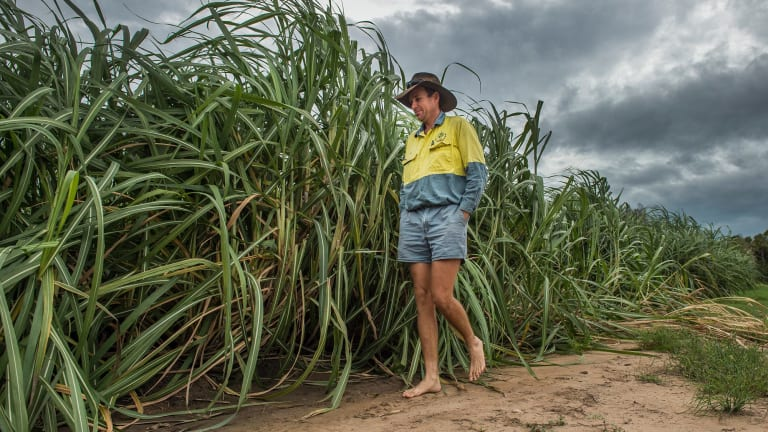 Ayr cane farmer Paul Villis checks his crops ahead of Cyclone Debbie's impact. The cyclone has wrought significant damage to sugarcane crops throughout Queensland.