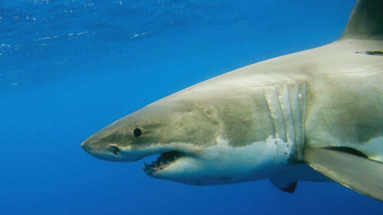 NSW's shark netting program was responsible for 151 sea creature deaths.