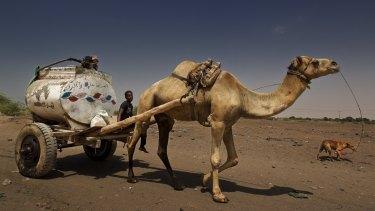 A camel-drawn water cart near Aden, in Yemen, a region usually very short of water.