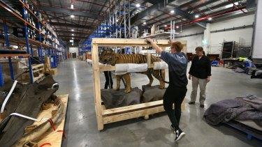 Removalists unpack a Sumatran tiger at the Australian Museum's new storage facility.