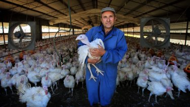 Calling for more support for farmers: Joe Grima at his turkey farm at Thirlmere.
