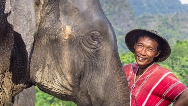 An elephant and mahout in Khao Sok, Thailand.
